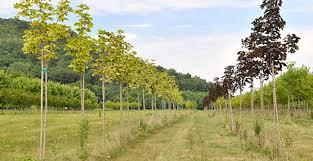 farm local tree farms tree farm nursery tree saplings