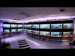 our fishroom youtube