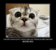 Insomnia Meme - insomni cats 2 gina quinn medicine woman