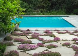 creeping thyme pool chicago by the garden consultants inc