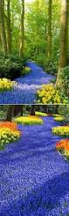 Spring Flower Pictures Keukenhof Holland World U0027s Largest Flower Garden See More