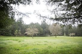 Chandelier Tree Address Drive Thru Tree Park Home Facebook