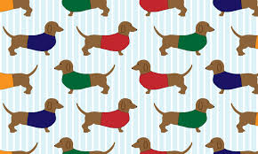 dachshund dogs wallpaper free stock photo public domain pictures