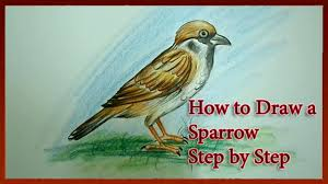 how to draw a sparrow easy youtube