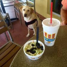 pdq restaurant is dog friendly