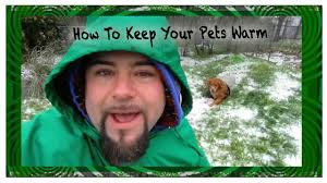 How To Keep A Bedroom Warm Keep Your Pets Comfortable In An Underground Dog House Youtube