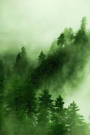 25 gorgeous forest painting ideas on pinterest watercolor