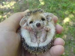 Take It Easy Mexican Meme - fancy take it easy mexican meme teeny tiny animals baby echidnas