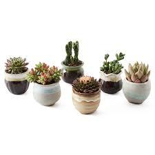 Succulent Pots For Sale Amazon Com Sun E 6 In Set 2 5 Inch Ceramic Flowing Glaze