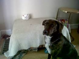 Cats In Dog Beds 10 Cats Who Stole Dog Beds And Didn U0027t Give A Damn About