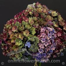 wholesale flowers denver amato one in a million not like a million others