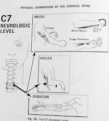 Innervation Of Supraspinatus Neck Shoulder U0026 Arm Pain
