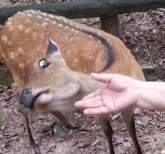 Oh Deer Meme - create meme friend friend animals oh deer pictures meme