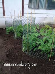Container Gardening Potatoes - 60 best growing potatoes images on pinterest gardening organic