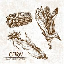 Best Animated Watch Photos 2017 Blue Maize Corn Vectors Photos And Psd Files Free Download
