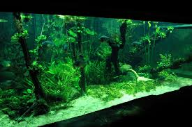 Why ing a large aquarium might be better – Aquariadise