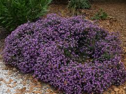 plant sale jc raulston arboretum