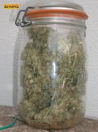 chambre de sechage cannabis comment conserver le cannabis du growshop alchimia