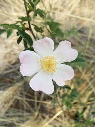 bouquet de fleurs roses blanches images gratuites paysage la nature blanc pétale printemps