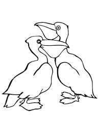 two pelicans coloring page free printable coloring pages
