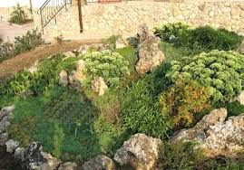 Rocks Garden Rocks Garden Rock Gardens Are For Lining Paths And