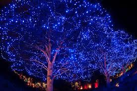 blossoms of light one million lights illuminating the denver