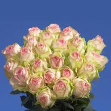 send roses send esperance roses global