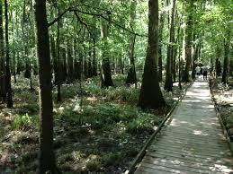 South Carolina national parks images File congaree national park south carolina boardwalk horizontal JPG