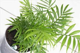 types of indoor plants one certain types of plants may be