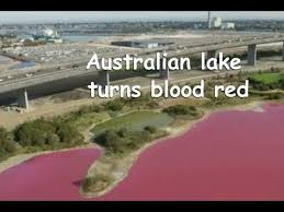 australia westgate park lake turns blood red youtube