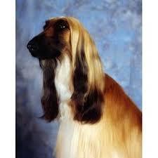 afghan hound ireland sterling silver irish hound cufflinks irish postage stamp