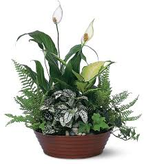 plants for funerals sympathy funeral flowers delivery warren oh adgate