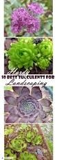 10 best hardy succulents for landscaping my recommended