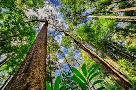 Amazon Com Method Daily Wood by 7 Steps You Can Take To Help Save The Amazon Rainforest