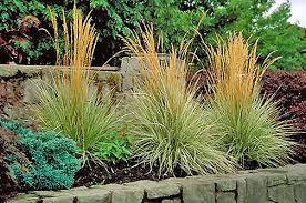 ornamental grasses heritage garden center