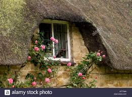 the window of a thatched cottage with climbing roses growing stock