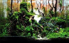 membuat aquascape bening bonsai aquascape google search aquascape design 1 pinterest