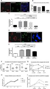 surface lamp 2 is an endocytic receptor that diverts antigen