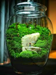 229 best terrariums images on pinterest gardening miniature