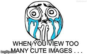 Cuteness Overload Meme - cuteness overload imgflip