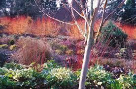 Herb Garden Winter - garden design garden design with winter garden wikipedia the