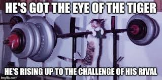 Eye Of The Tiger Meme - eye of the tiger imgflip