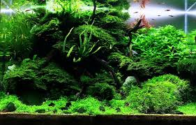 aquascaping layouts with stone and driftwood tobias coring and aquascaping aqua rebell