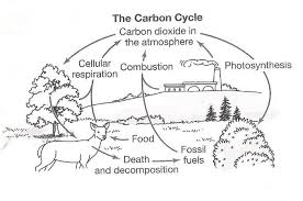 Carbon Cycle Coloring Worksheet Nitrogen Cycle Clip Art 50 New Photosynthesis Coloring Page