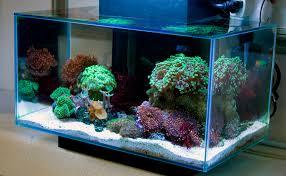 fluval edge marine light fluval edge marine conversion ultimatereef com nano reef