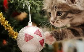 cat christmas christmas cat wallpaper 2560x1600 12254