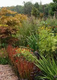 Pflanzen Fur Japanischen Garten Japanisches Blutgras Im Garten Pflanzen Ein Feuerroter Akzent