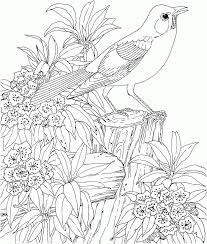 free spring coloring pages for adults coloring home