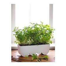 sötcitron self watering plant pot indoor outdoor white white