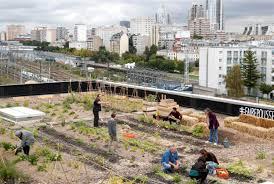 Roof Garden U2014 City Farmer News